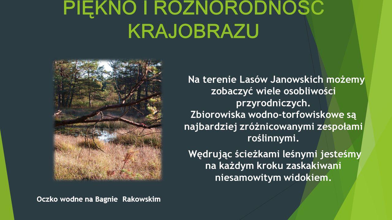 LASY JANOWSKIE – RAJ PRZYRODNIKA Lasy Janowskie – jeden z największych obszarów leśnych w Polsce. Tereny podmokłe, torfowiska oraz sąsiadujące z nimi