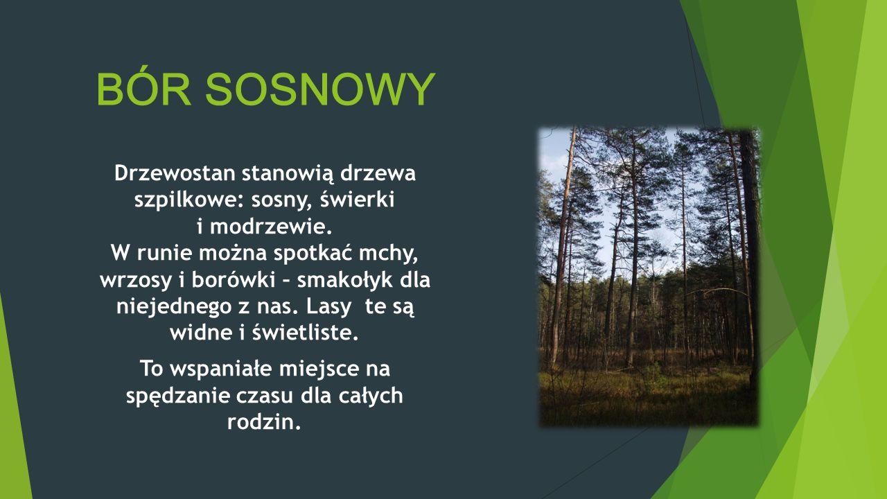 PIĘKNO I RÓŻNORODNOŚĆ KRAJOBRAZU Na terenie Lasów Janowskich możemy zobaczyć wiele osobliwości przyrodniczych. Zbiorowiska wodno-torfowiskowe są najba