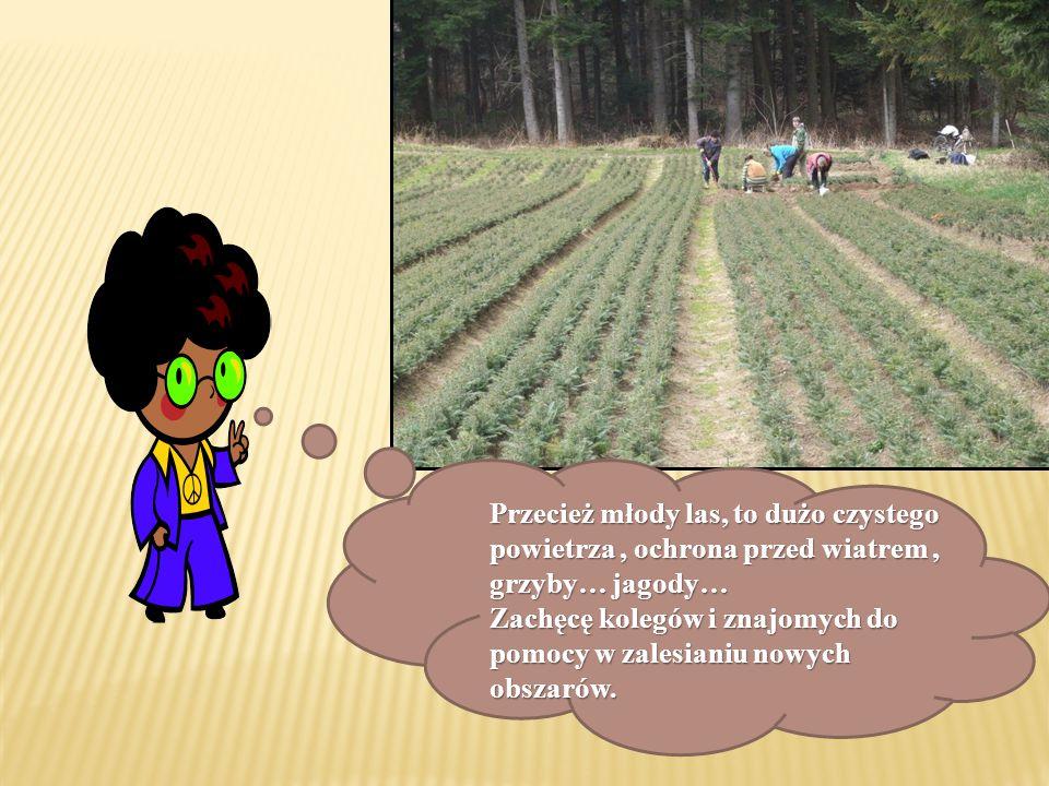 Przecież młody las, to dużo czystego powietrza, ochrona przed wiatrem, grzyby… jagody… Zachęcę kolegów i znajomych do pomocy w zalesianiu nowych obsza