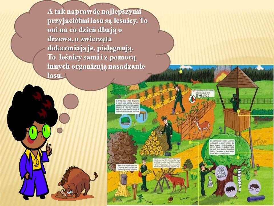 Przyjaciel leśnik typuje także obszary leśne, które należy zgłosić do nadleśnictwa jako zagrożone przez szkodniki.