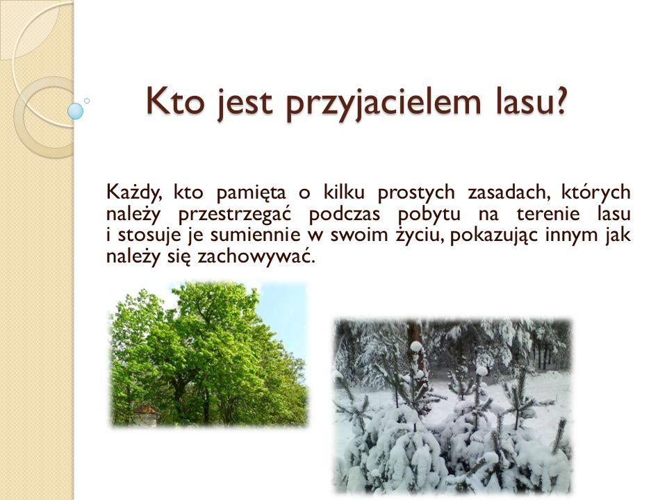 Kto jest przyjacielem lasu? Każdy, kto pamięta o kilku prostych zasadach, których należy przestrzegać podczas pobytu na terenie lasu i stosuje je sumi