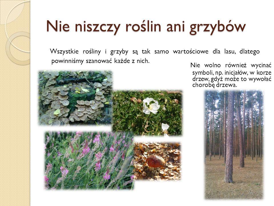 Nie niszczy roślin ani grzybów Wszystkie rośliny i grzyby są tak samo wartościowe dla lasu, dlatego powinniśmy szanować każde z nich.