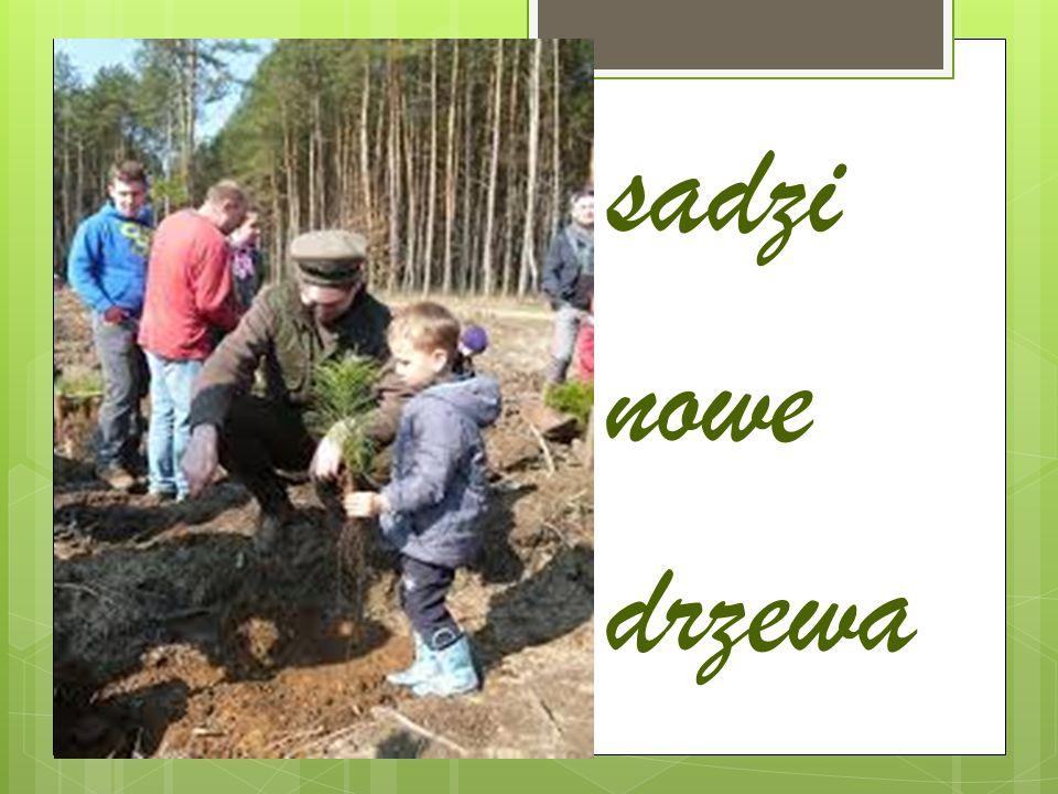 sadzi nowe drzewa