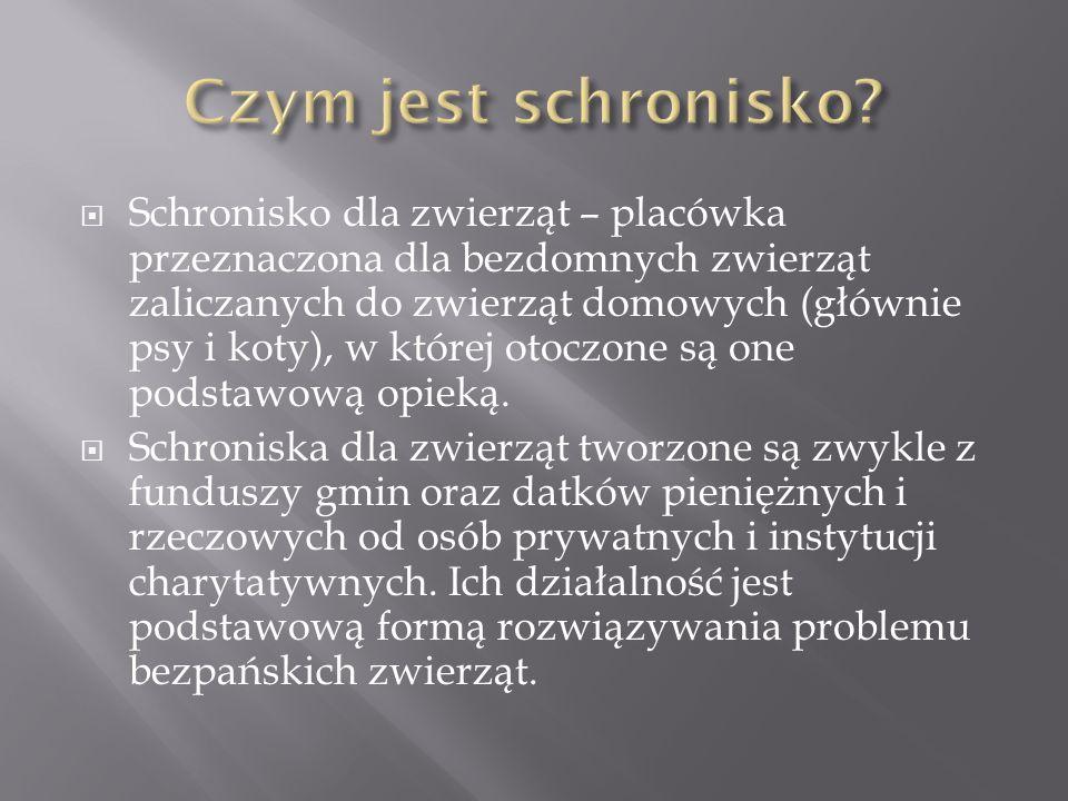  W Polsce jest zarejestrowanych ok.100 schronisk.