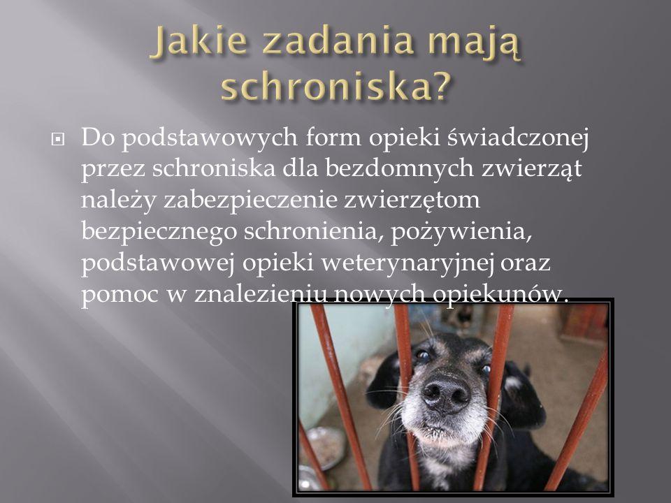  Do podstawowych form opieki świadczonej przez schroniska dla bezdomnych zwierząt należy zabezpieczenie zwierzętom bezpiecznego schronienia, pożywien