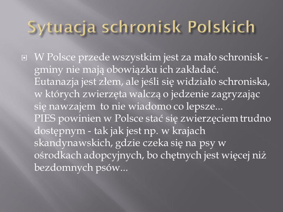  W Polsce przede wszystkim jest za mało schronisk - gminy nie mają obowiązku ich zakładać. Eutanazja jest złem, ale jeśli się widziało schroniska, w