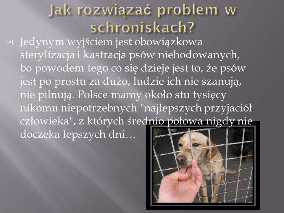  Jedynym wyjściem jest obowiązkowa sterylizacja i kastracja psów niehodowanych, bo powodem tego co się dzieje jest to, że psów jest po prostu za dużo