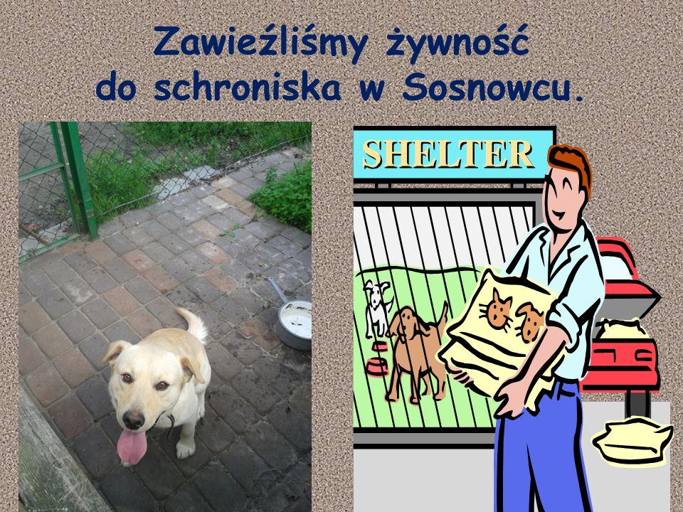 Zawieźliśmy żywność do schroniska w Sosnowcu.