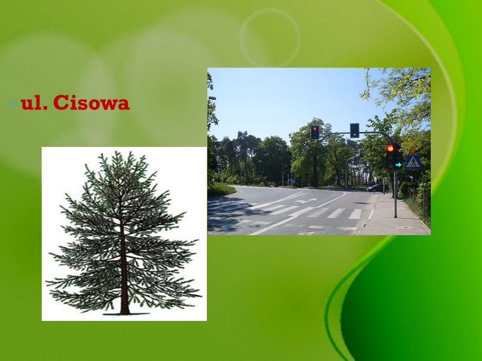  ul. Cisowa