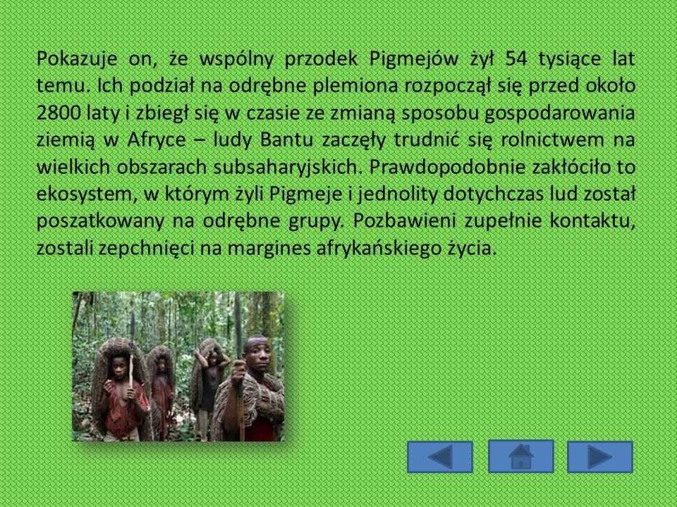 Pokazuje on, że wspólny przodek Pigmejów żył 54 tysiące lat temu. Ich podział na odrębne plemiona rozpoczął się przed około 2800 laty i zbiegł się w c