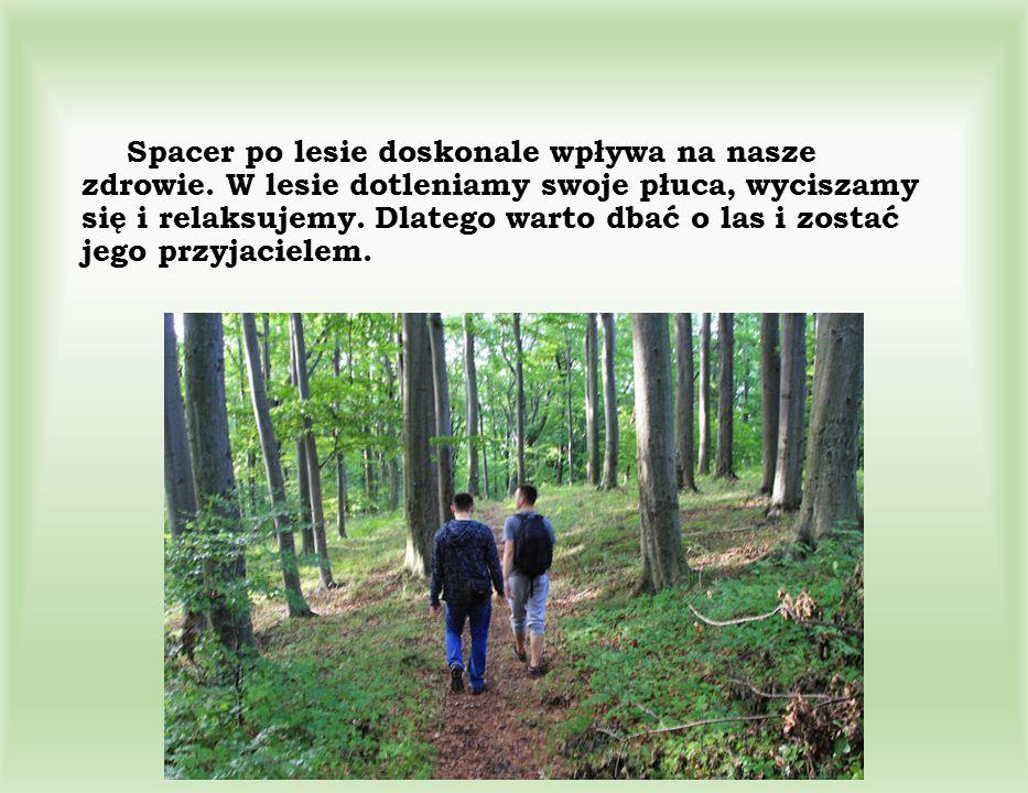 Spacer po lesie doskonale wpływa na nasze zdrowie. W lesie dotleniamy swoje płuca, wyciszamy się i relaksujemy. Dlatego warto dbać o las i zostać jego