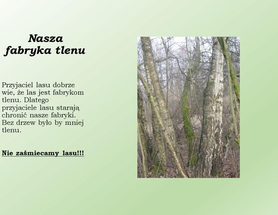 Spacer po lesie doskonale wpływa na nasze zdrowie.