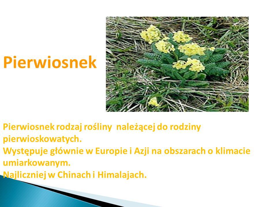 Pierwiosnek Pierwiosnek rodzaj rośliny należącej do rodziny pierwioskowatych. Występuje głównie w Europie i Azji na obszarach o klimacie umiarkowanym.