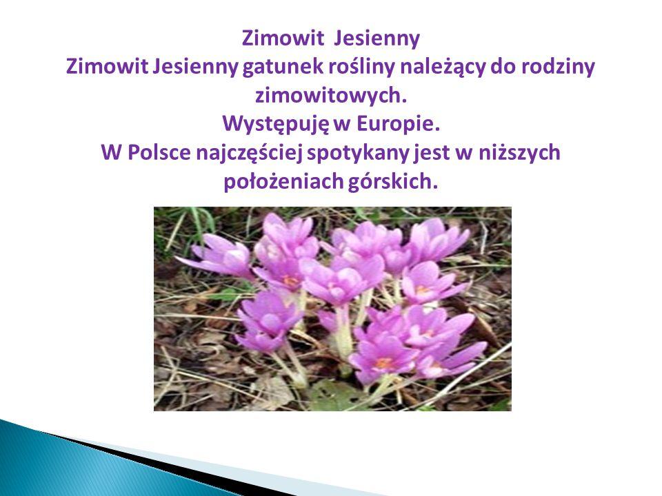 Zimowit Jesienny Zimowit Jesienny gatunek rośliny należący do rodziny zimowitowych. Występuję w Europie. W Polsce najczęściej spotykany jest w niższyc
