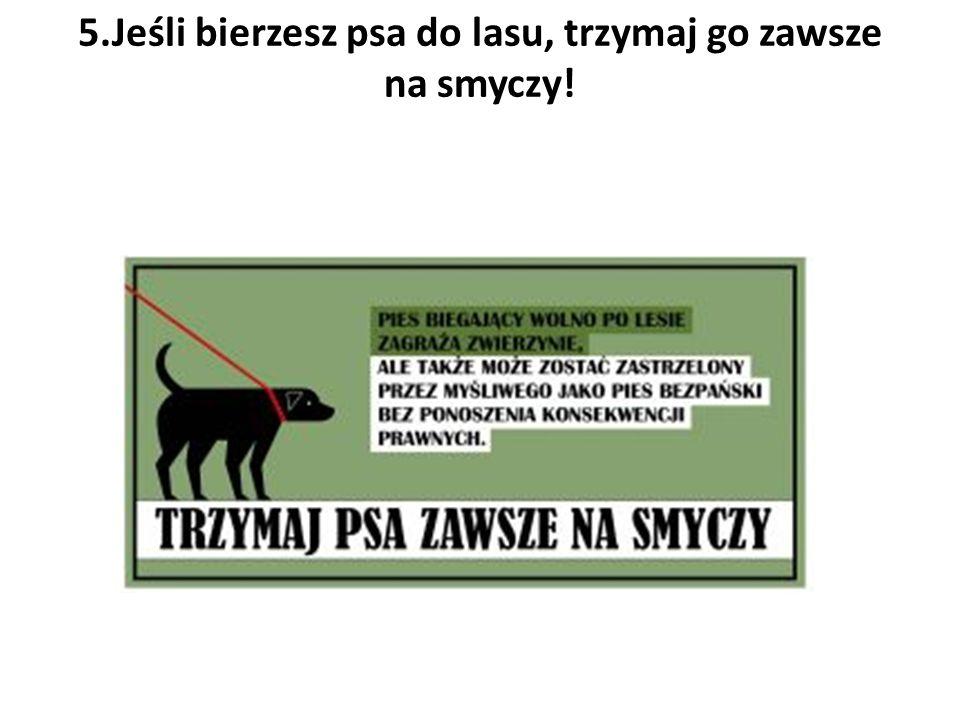 5.Jeśli bierzesz psa do lasu, trzymaj go zawsze na smyczy!