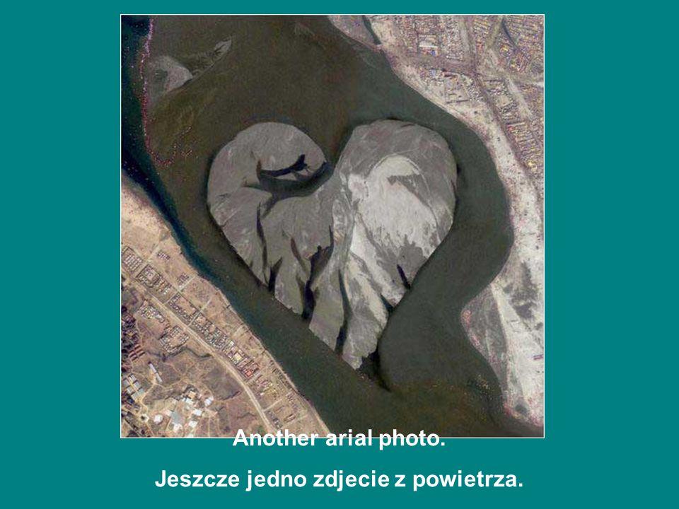 Arial photo of a dulphin Fotografia delfina z powietrza