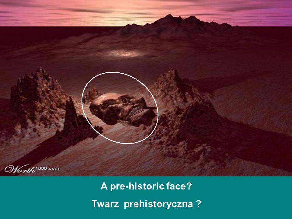 A pre-historic face? Twarz prehistoryczna ?