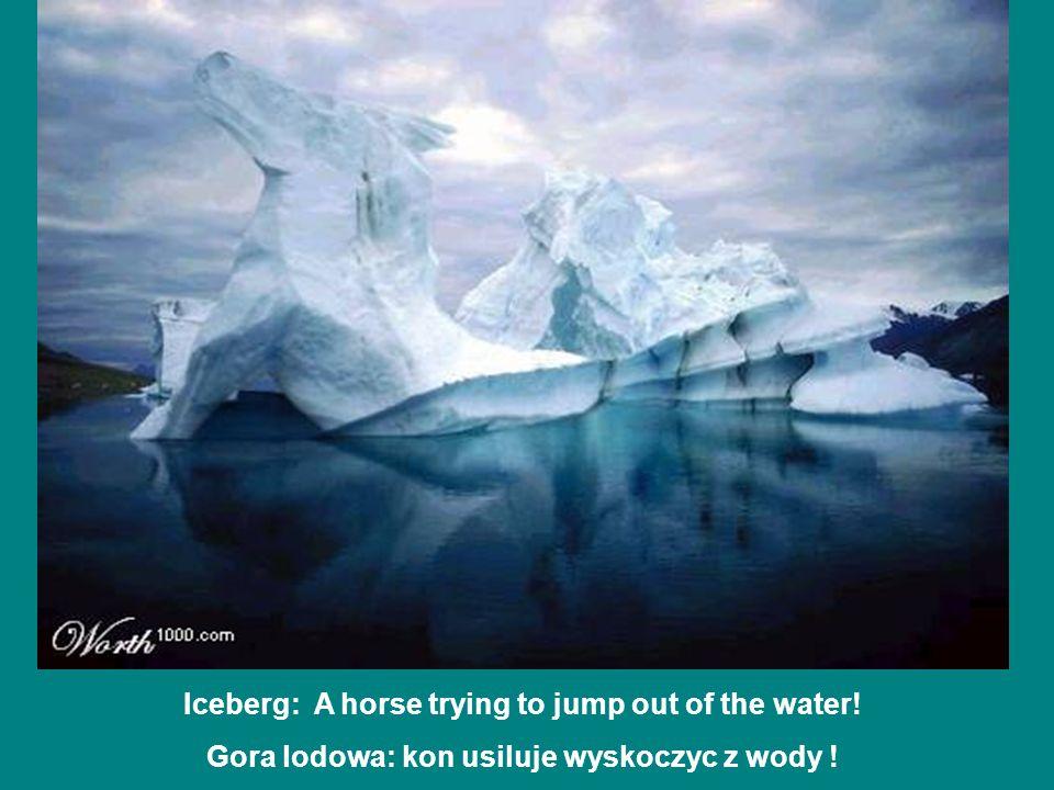 Iceberg: A horse trying to jump out of the water! Gora lodowa: kon usiluje wyskoczyc z wody !