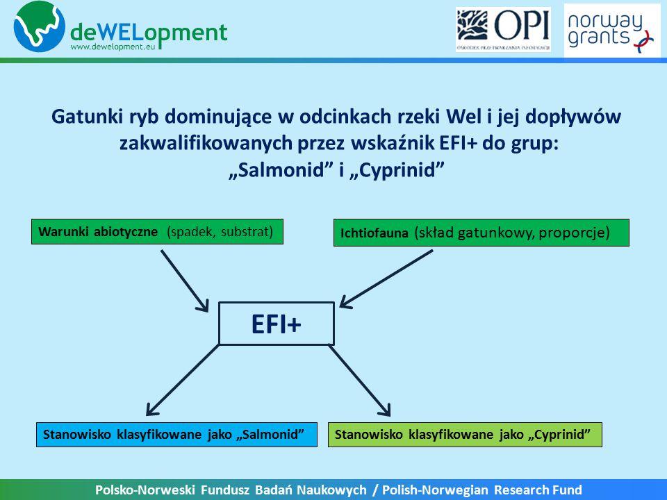 """Polsko-Norweski Fundusz Badań Naukowych / Polish-Norwegian Research Fund Gatunki ryb dominujące w odcinkach rzeki Wel i jej dopływów zakwalifikowanych przez wskaźnik EFI+ do grup: """"Salmonid i """"Cyprinid Warunki abiotyczne (spadek, substrat) Ichtiofauna (skład gatunkowy, proporcje) EFI+ Stanowisko klasyfikowane jako """"Cyprinid Stanowisko klasyfikowane jako """"Salmonid"""