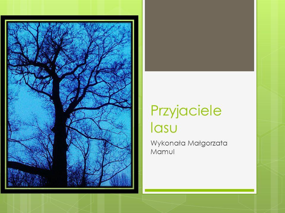 Przyjaciele lasu Wykonała Małgorzata Mamul