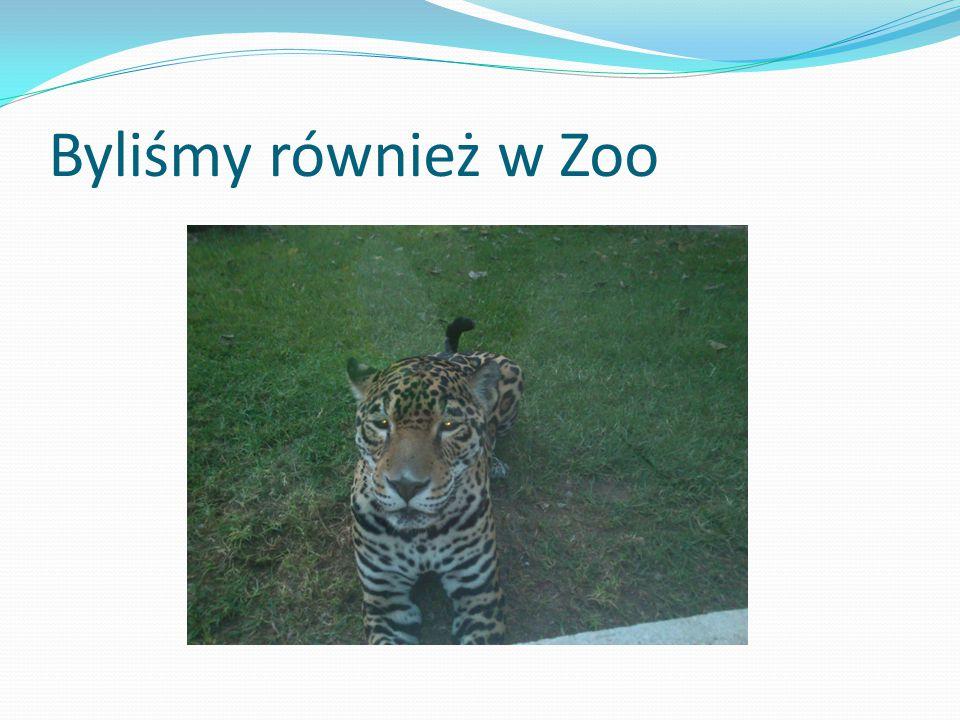 Byliśmy również w Zoo