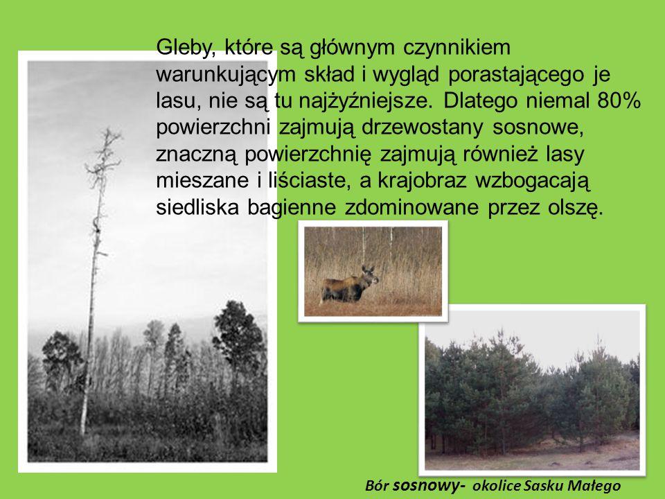 Gleby, które są głównym czynnikiem warunkującym skład i wygląd porastającego je lasu, nie są tu najżyźniejsze.