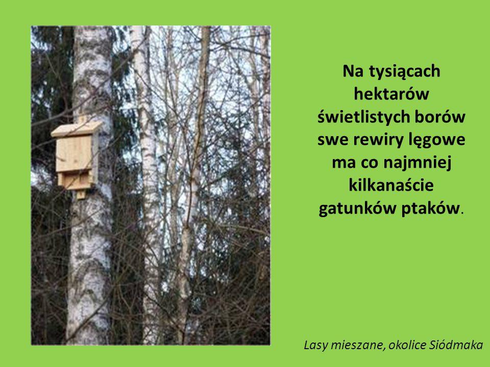 Na tysiącach hektarów świetlistych borów swe rewiry lęgowe ma co najmniej kilkanaście gatunków ptaków.
