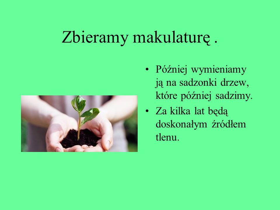Zbieramy makulaturę.Później wymieniamy ją na sadzonki drzew, które później sadzimy.