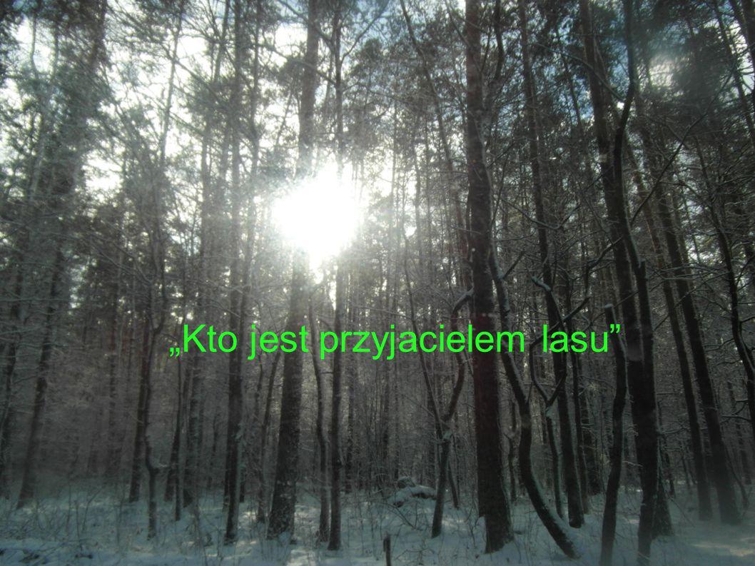 Przyjacielem lasu może być każdy z nas, a nawet zwierzęta.