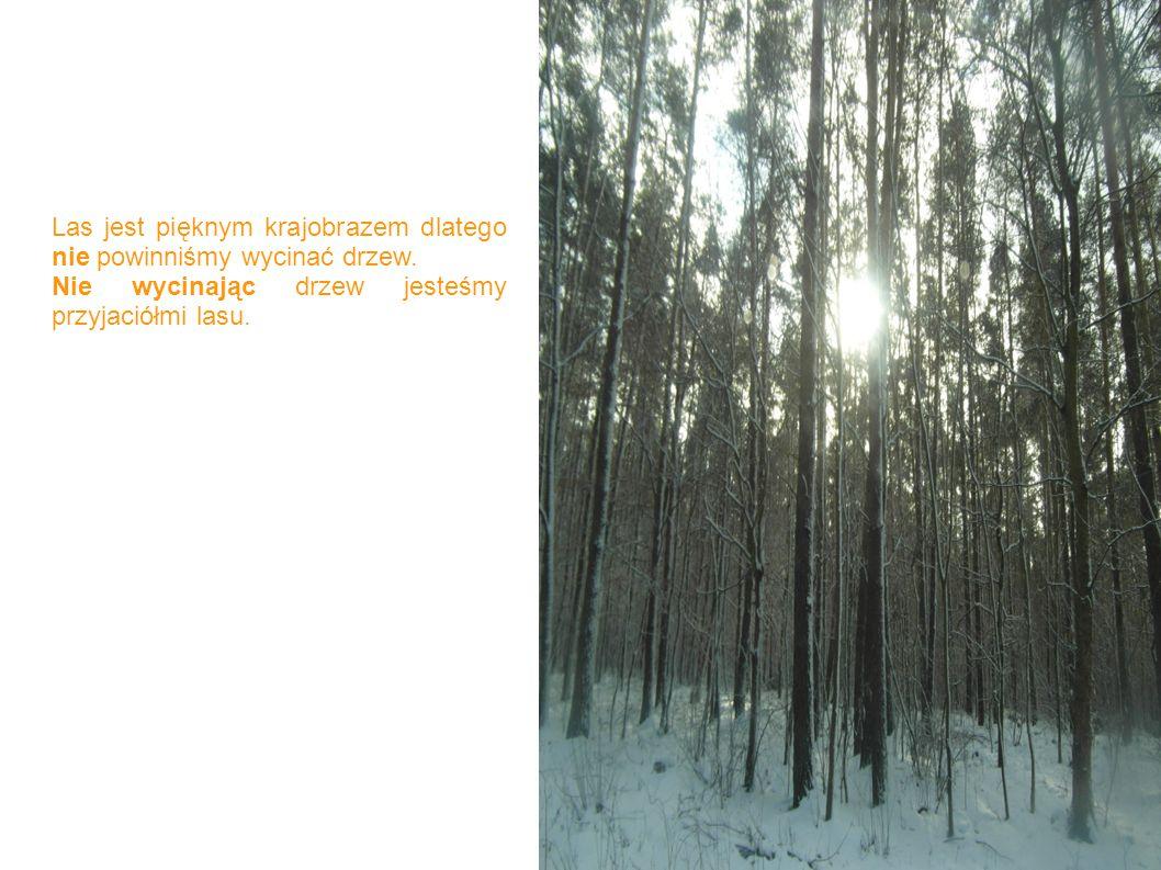 Las jest pięknym krajobrazem dlatego nie powinniśmy wycinać drzew. Nie wycinając drzew jesteśmy przyjaciółmi lasu.