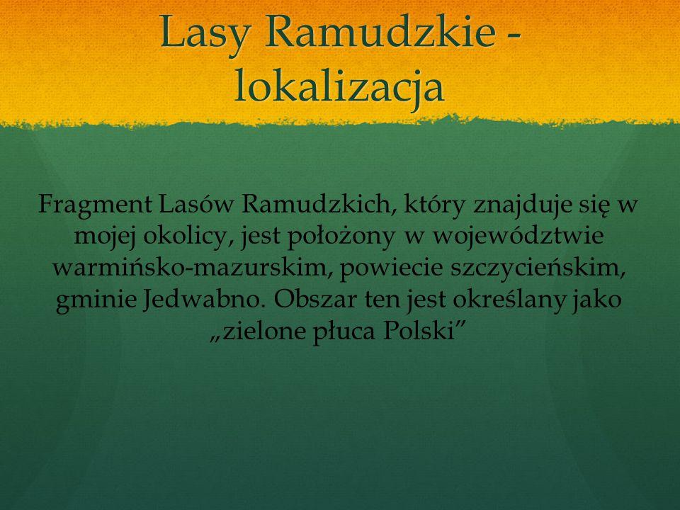 Dlaczego Lasy Ramudzkie są wartościowe dla ludzi?