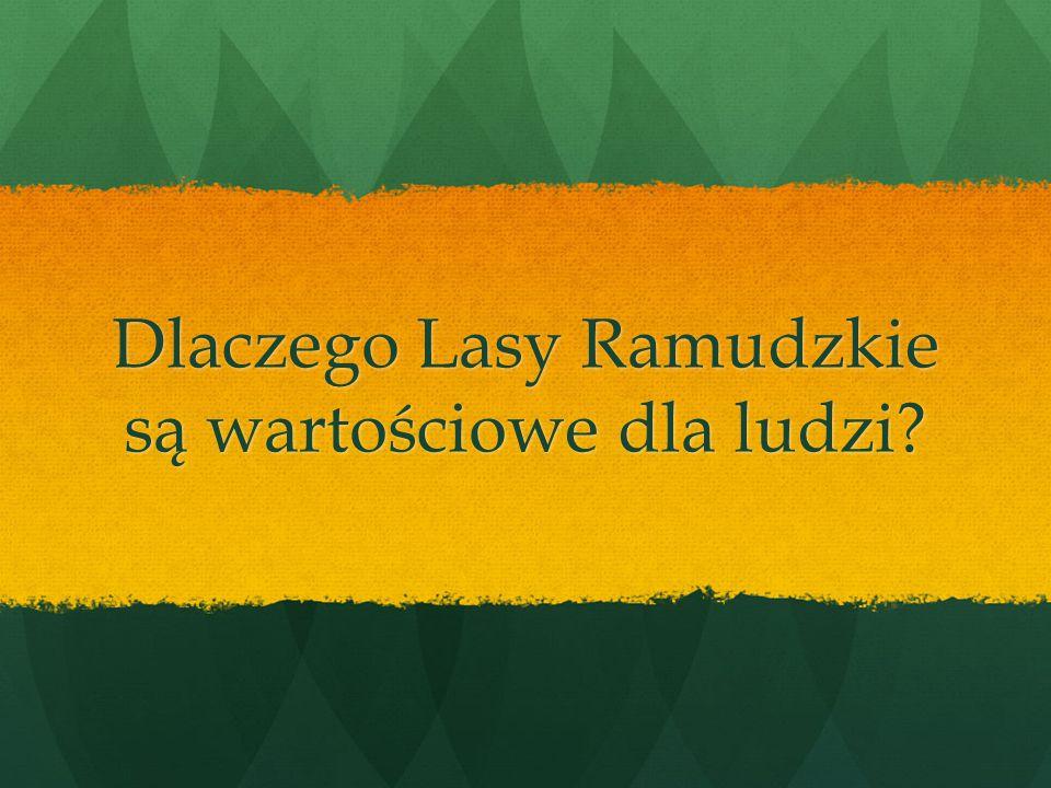 Dlaczego Lasy Ramudzkie są wartościowe dla ludzi