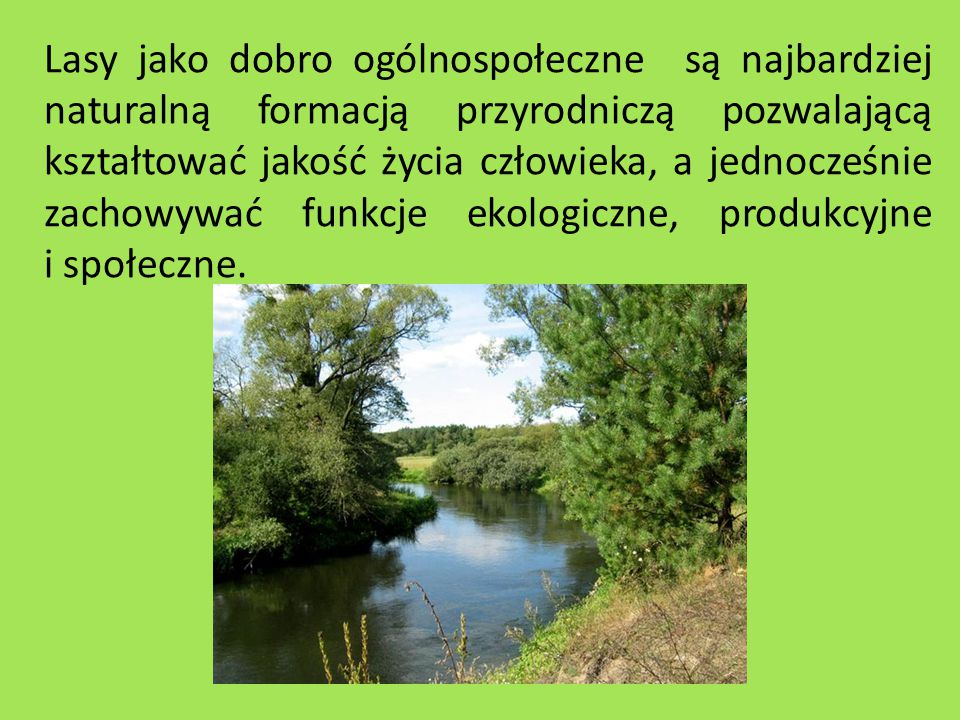 Las w Lipowcu