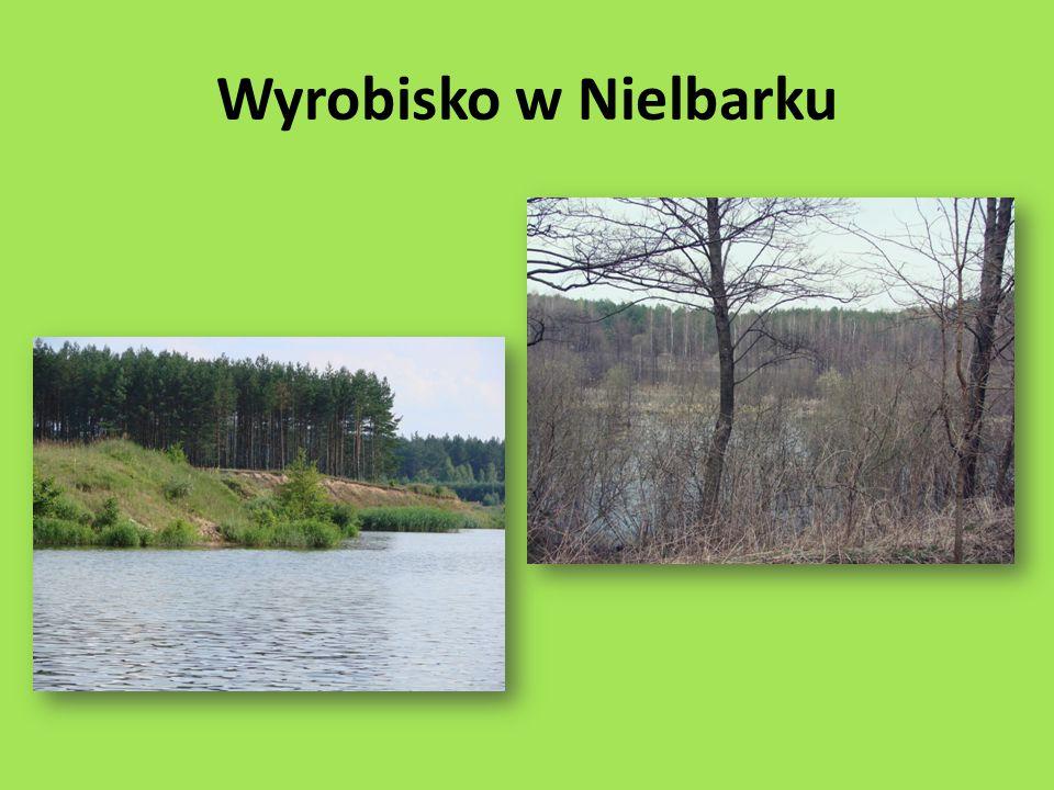 Cały teren powiatu nowomiejskiego znajduje się w granicach obszaru funkcjonalnego Zielone Płuca Polski W lasach nowomiejskich znajduje się Kapliczka Trzy Dęby.
