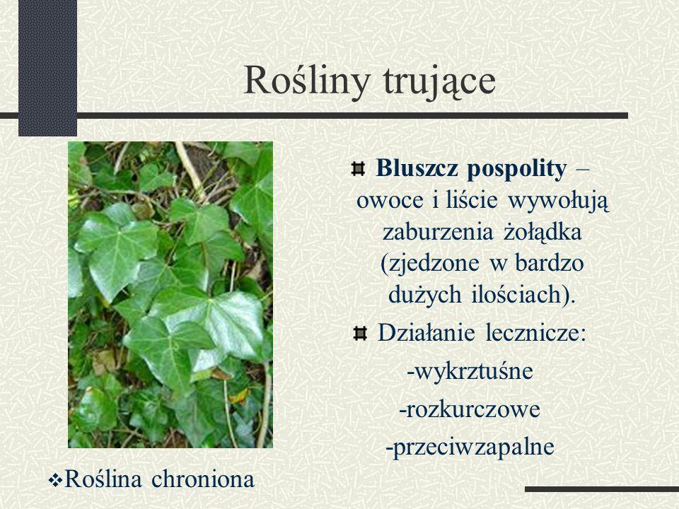 Rośliny trujące Bluszcz pospolity – owoce i liście wywołują zaburzenia żołądka (zjedzone w bardzo dużych ilościach). Działanie lecznicze: -wykrztuśne