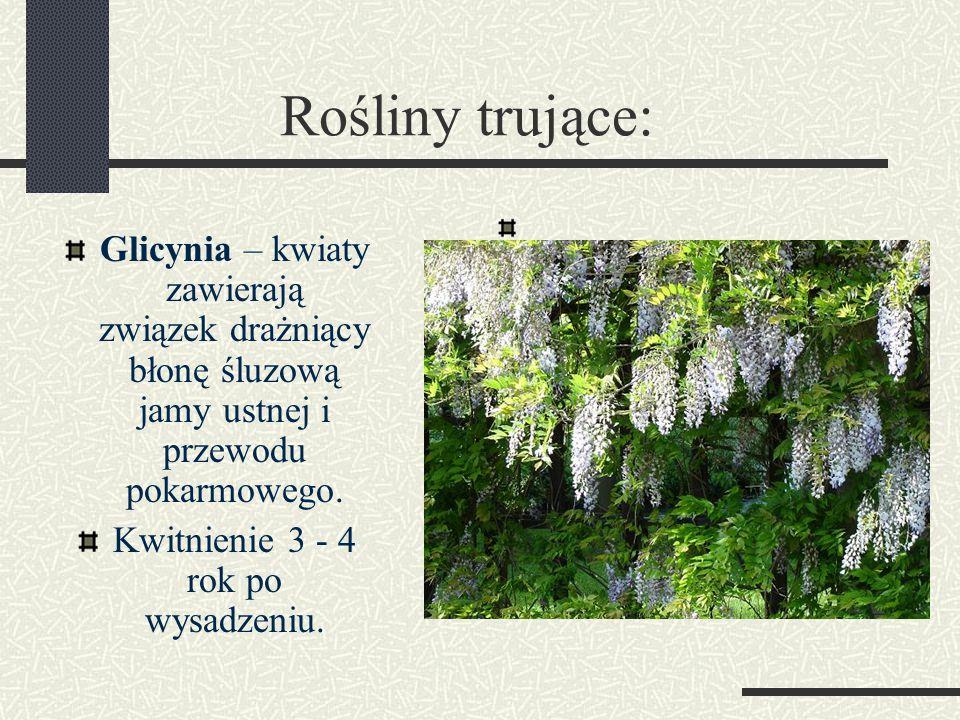 Rośliny trujące: Glicynia – kwiaty zawierają związek drażniący błonę śluzową jamy ustnej i przewodu pokarmowego.