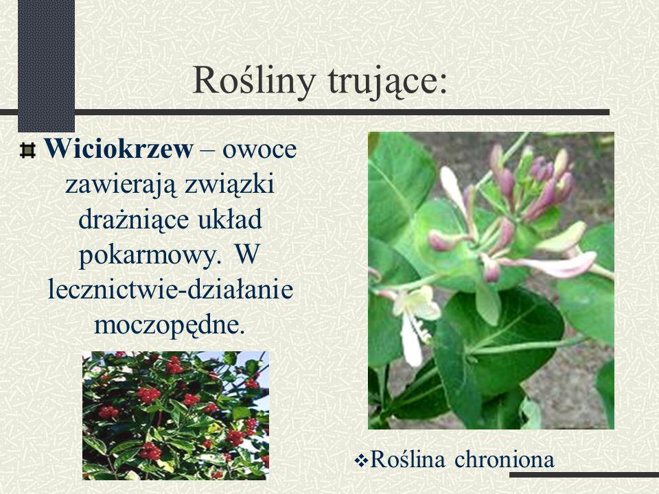 Rośliny trujące: Wiciokrzew – owoce zawierają związki drażniące układ pokarmowy. W lecznictwie-działanie moczopędne.  Roślina chroniona