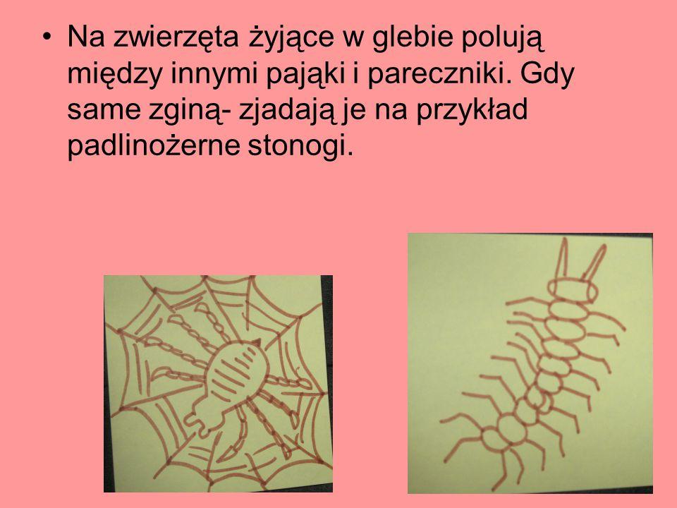 Na zwierzęta żyjące w glebie polują między innymi pająki i pareczniki. Gdy same zginą- zjadają je na przykład padlinożerne stonogi.