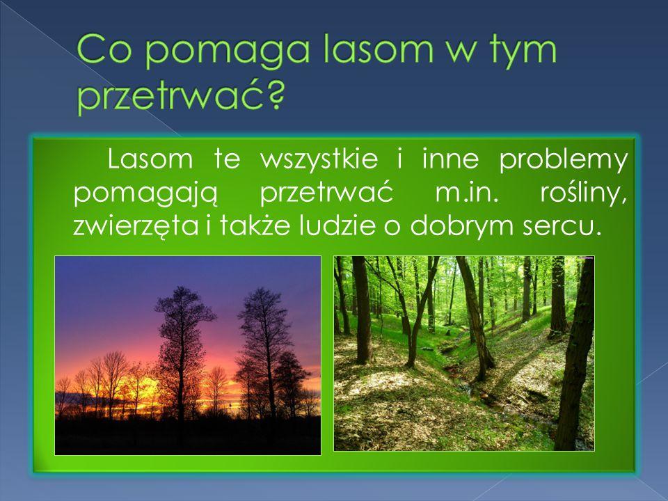 Lasom te wszystkie i inne problemy pomagają przetrwać m.in. rośliny, zwierzęta i także ludzie o dobrym sercu.