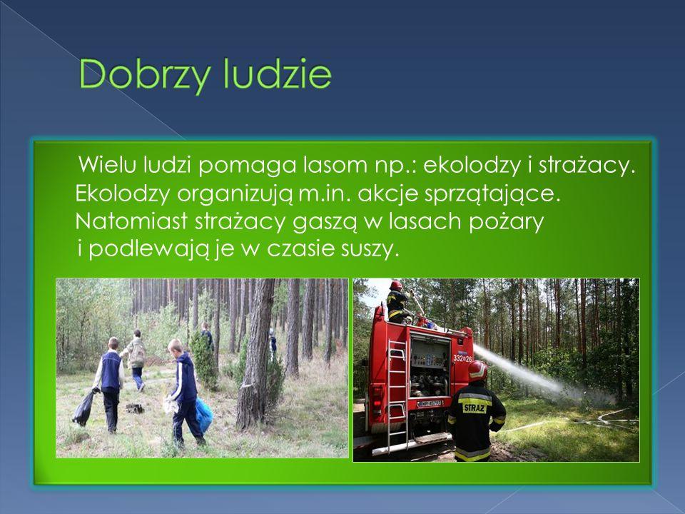 Wielu ludzi pomaga lasom np.: ekolodzy i strażacy. Ekolodzy organizują m.in. akcje sprzątające. Natomiast strażacy gaszą w lasach pożary i podlewają j