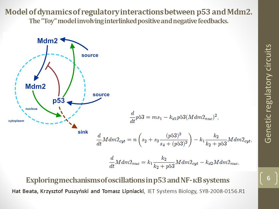 6 Genetic regulatory circuits Exploring mechanisms of oscillations in p53 and NF- кB systems Hat Beata, Krzysztof Puszyński and Tomasz Lipniacki, IET Systems Biology, SYB-2008-0156.R1 Model of dynamics of regulatory interactions between p53 and Mdm2.