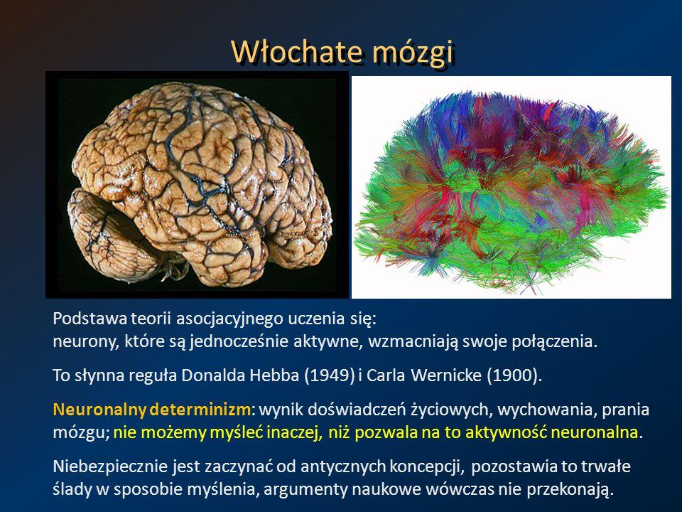Włochate mózgi Podstawa teorii asocjacyjnego uczenia się: neurony, które są jednocześnie aktywne, wzmacniają swoje połączenia. To słynna reguła Donald