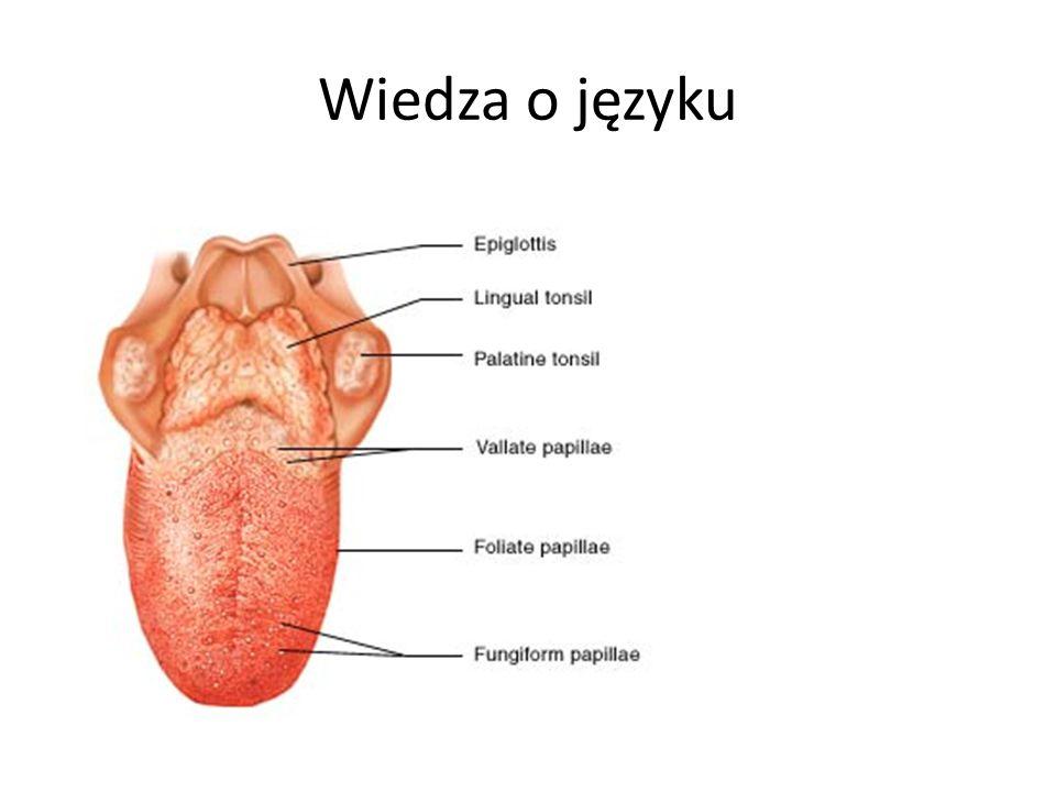 """Semiotyka Nauka o znakach – język jako system znaków Semantyka (znak – znaczenie) Syntaktyka (znak – znak) Pragmatyka (znak – praktyka użycia) Podstawowe """"komponenty wypowiedzi językowych: -nazwy; -zdania."""