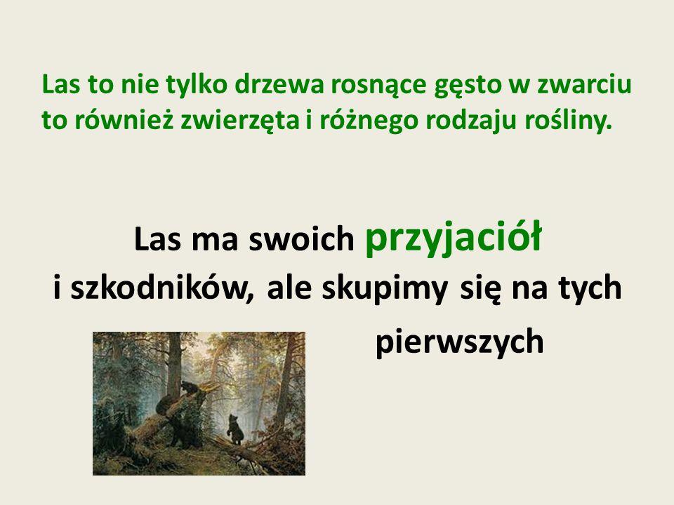 Las to nie tylko drzewa rosnące gęsto w zwarciu to również zwierzęta i różnego rodzaju rośliny.