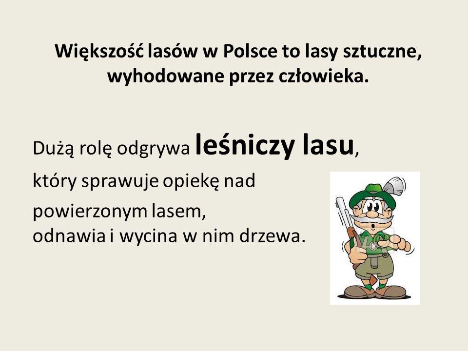 Większość lasów w Polsce to lasy sztuczne, wyhodowane przez człowieka.