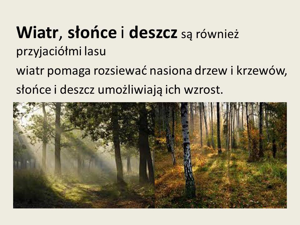 Wiatr, słońce i deszcz są również przyjaciółmi lasu wiatr pomaga rozsiewać nasiona drzew i krzewów, słońce i deszcz umożliwiają ich wzrost.