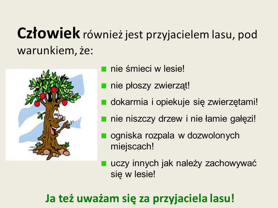 Człowiek również jest przyjacielem lasu, pod warunkiem, że: nie śmieci w lesie.