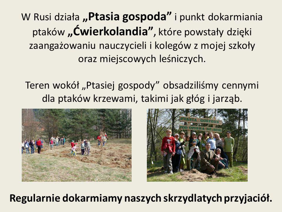 """W Rusi działa """"Ptasia gospoda i punkt dokarmiania ptaków """"Ćwierkolandia , które powstały dzięki zaangażowaniu nauczycieli i kolegów z mojej szkoły oraz miejscowych leśniczych."""