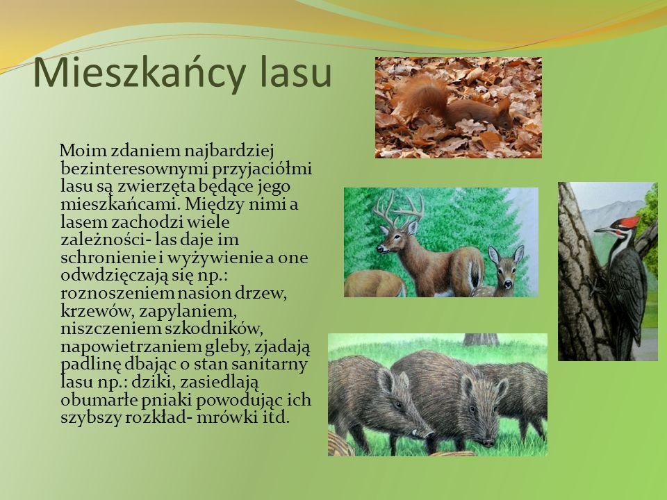 Mieszkańcy lasu Moim zdaniem najbardziej bezinteresownymi przyjaciółmi lasu są zwierzęta będące jego mieszkańcami. Między nimi a lasem zachodzi wiele