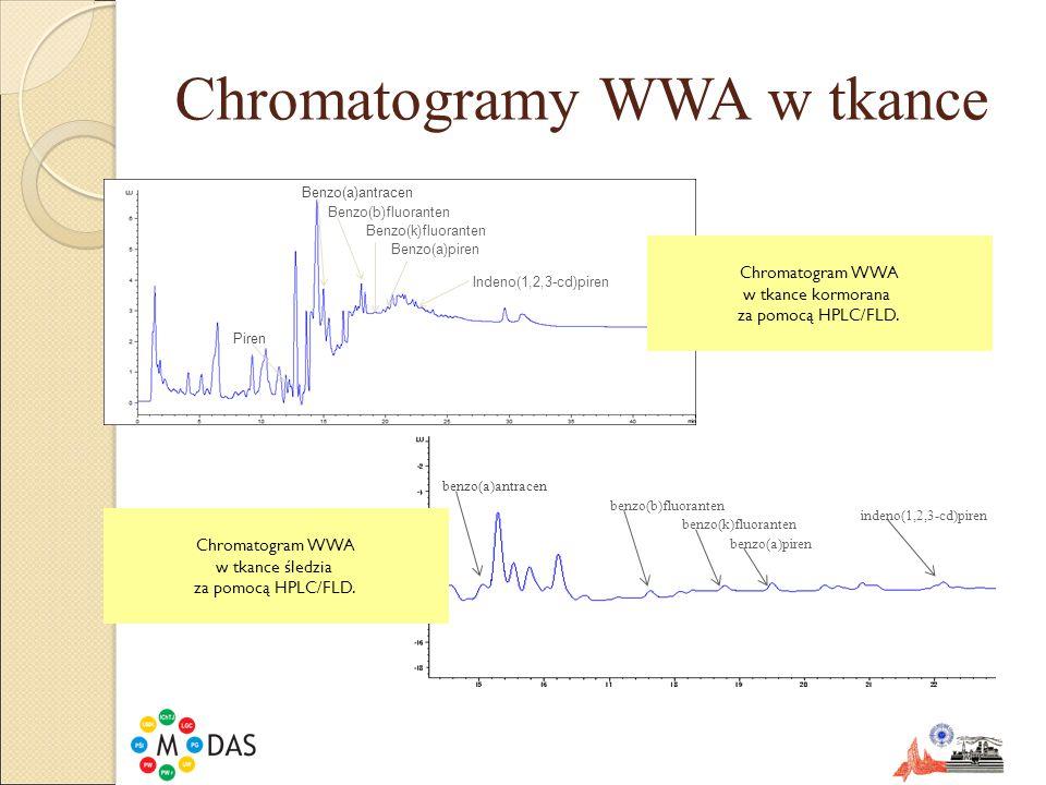 Chromatogramy WWA w tkance Piren Benzo(a)antracen Benzo(b)fluoranten Indeno(1,2,3-cd)piren Benzo(a)piren Benzo(k)fluoranten Chromatogram WWA w tkance